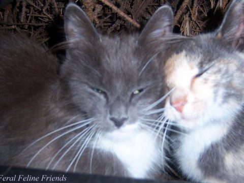 "Two cats cuddle in ""The Colony of Love"" at the Tommy Feral Feline Friends colony. (Rose Murphy photo)"