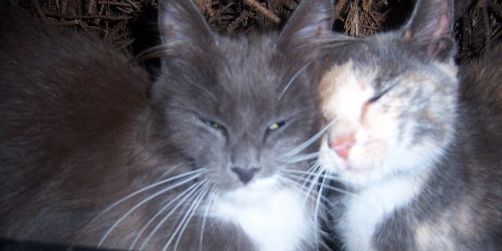 """Two cats cuddle in """"The Colony of Love"""" at the Tommy Feral Feline Friends colony. (Rose Murphy photo)"""